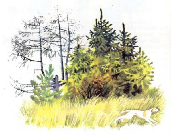 Иллюстратор Н.Устинов Автор М.Пришвин Страна СССР, Россия Год издания 1996 Издательство Росмэн